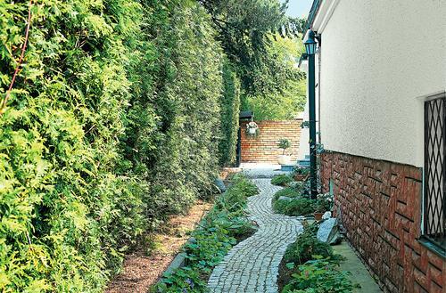 Co posadzić przy ogrodzeniu